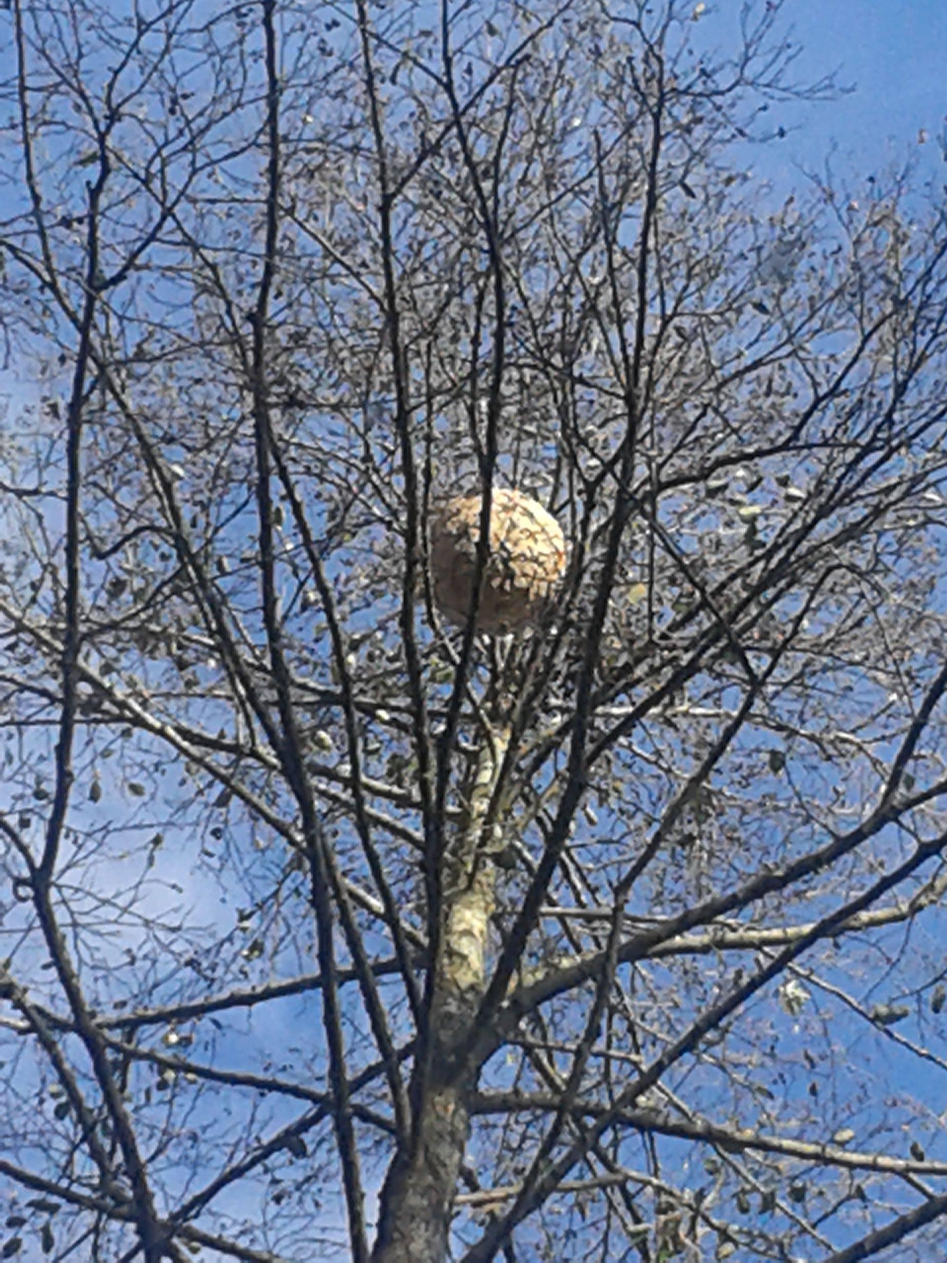 Nid secondaire dans un arbre